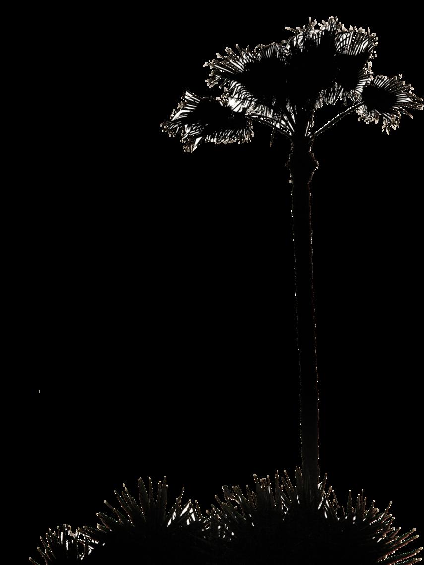 855x1140 Clip Art Inspiration Palm Tree Silhouette Clip Art Palm Tree