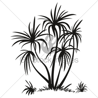 325x325 Palm Trees, Black Silhouettes Gl Stock Images