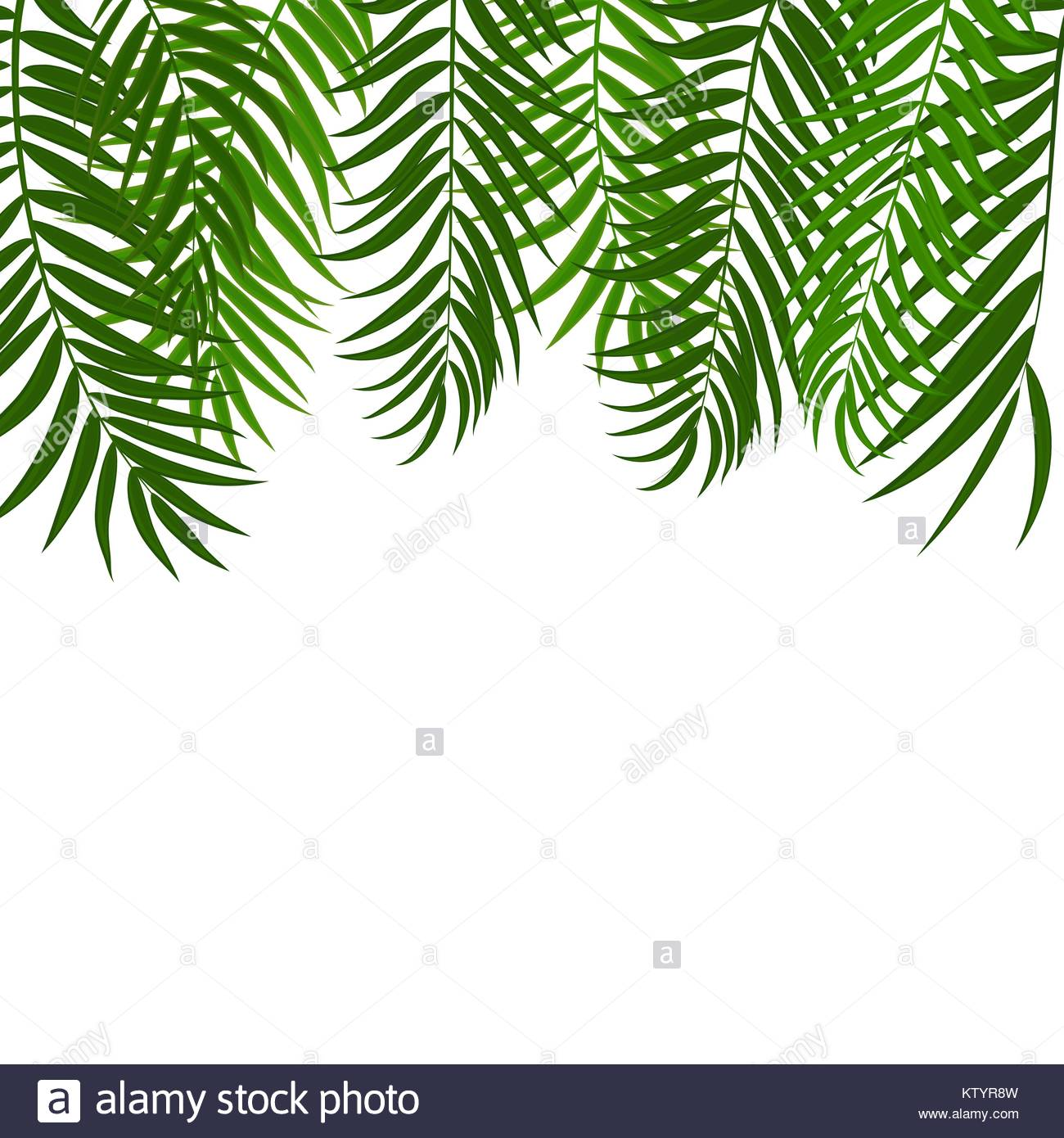 1300x1390 Beautifil Palm Tree Leaf Silhouette Background Vector Illustration