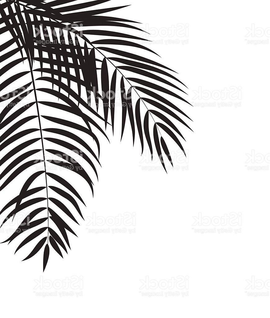870x1024 Best Free Beautifil Palm Tree Leaf Silhouette Background Vector