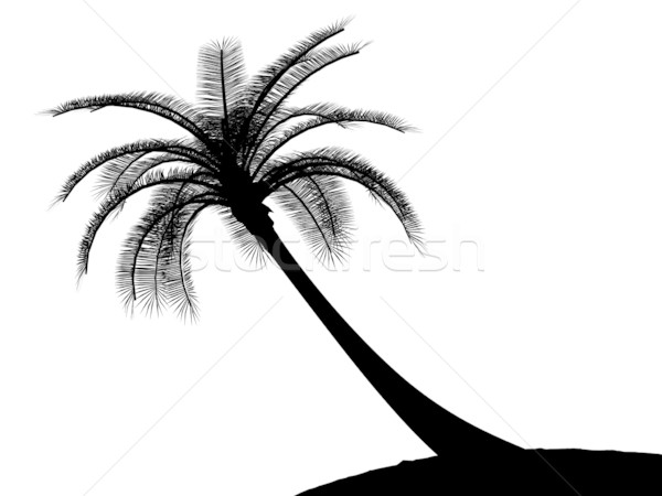 600x450 Black On White Palm Tree Silhouette Stock Photo Johnjohnson