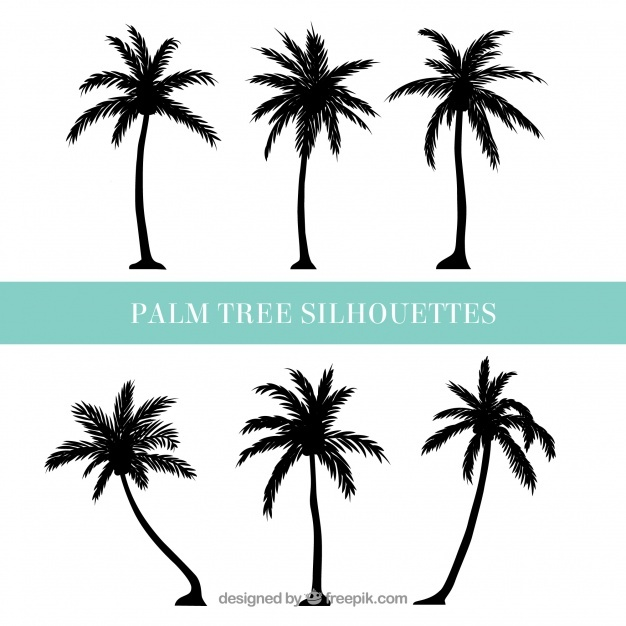 626x626 Palm Tree Vectors, Photos And Psd Files Free Download