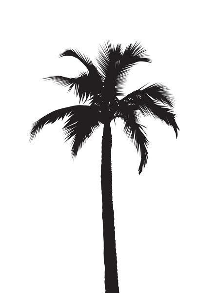 449x600 Palm Tree Silhouette Silhouettes Palm Tree In Palm