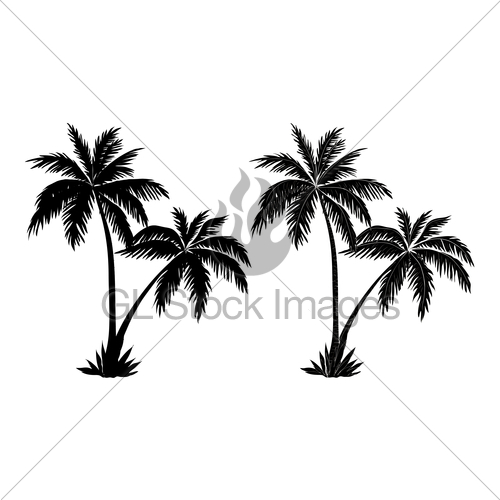 500x500 Palm Trees, Black Silhouettes Gl Stock Images