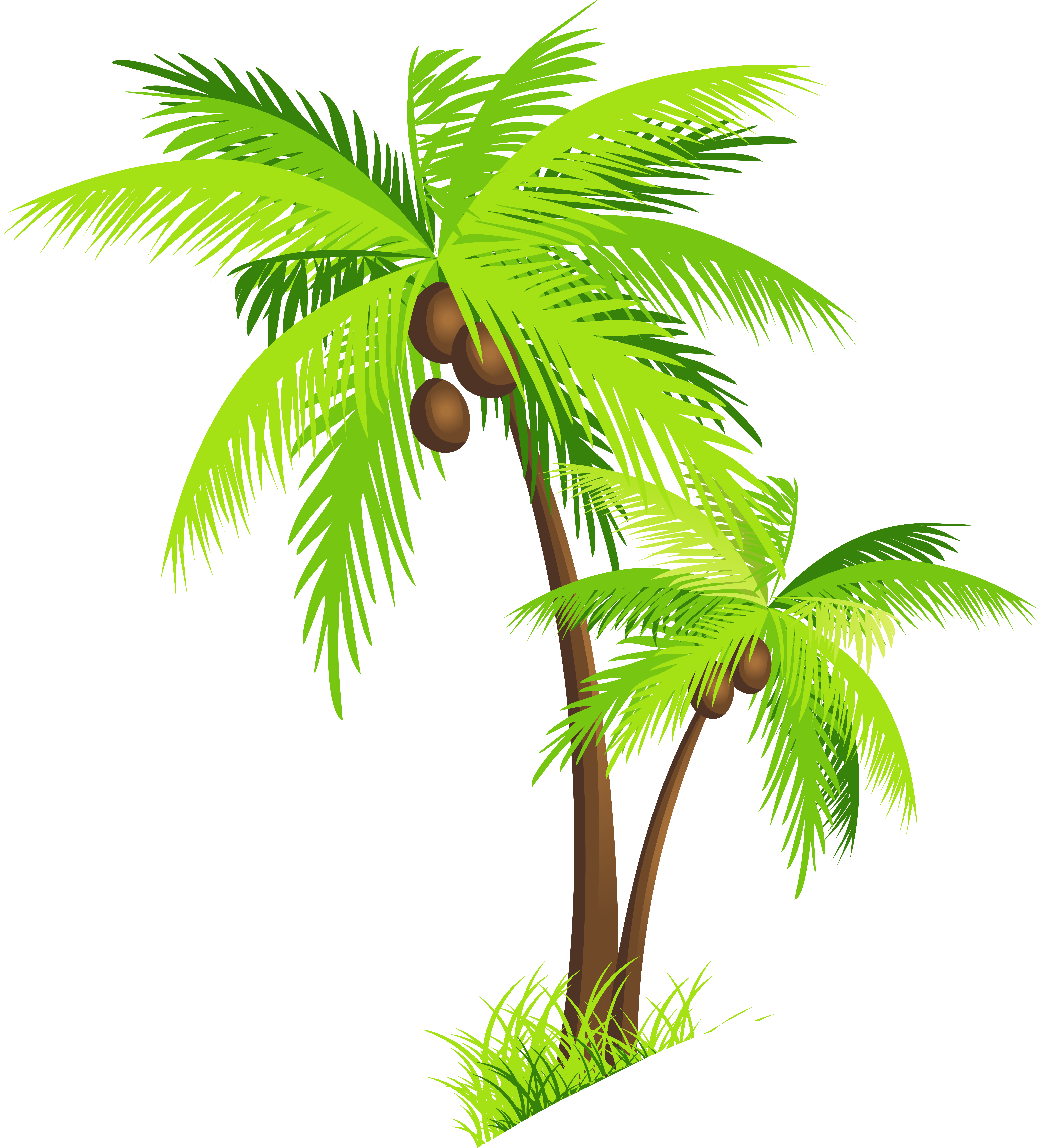 6146x6787 Palm Tree With Coconuts Png Clipart Pictureu200b Gallery