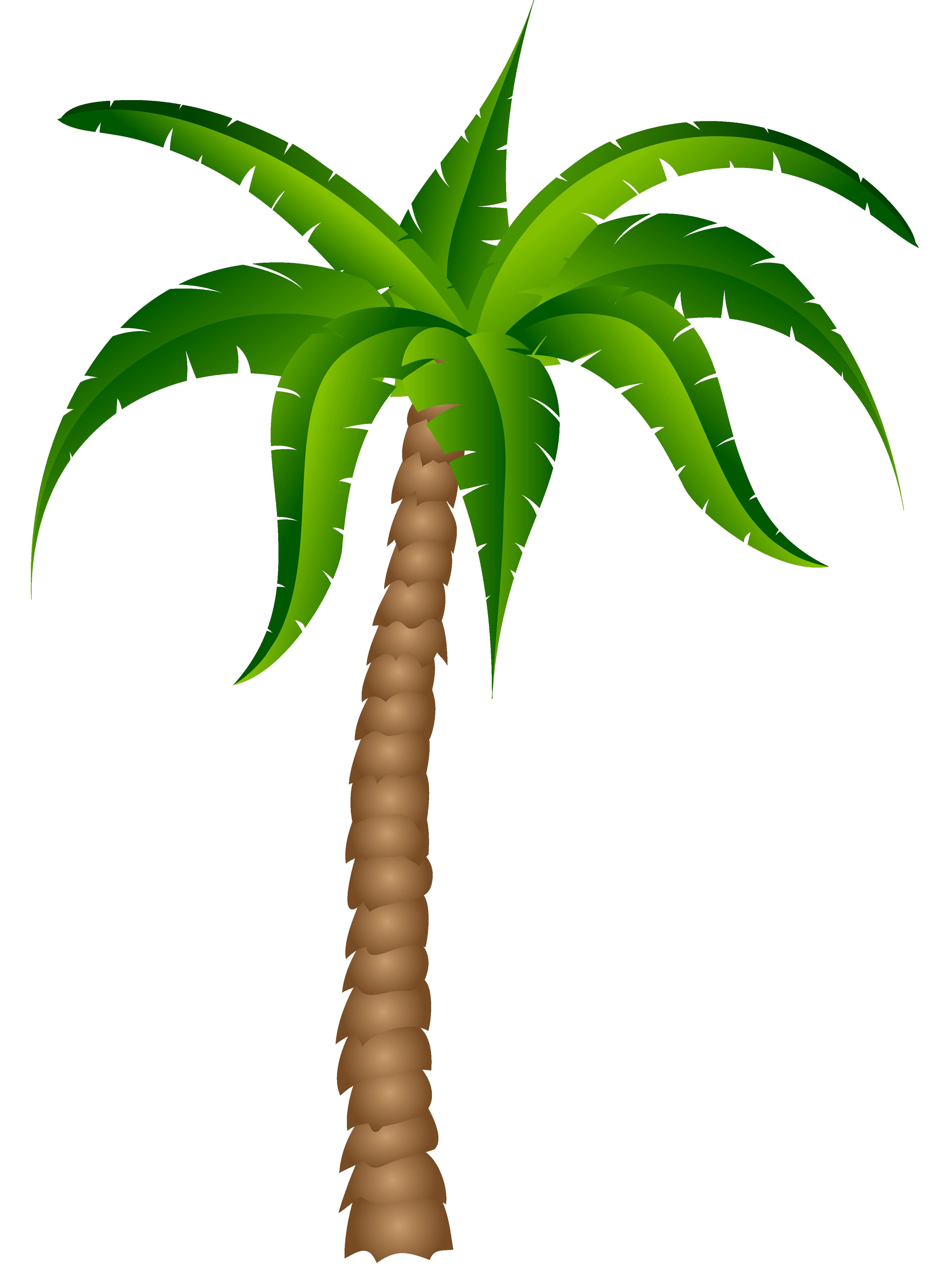 3672x4952 Clipart Palm Tree