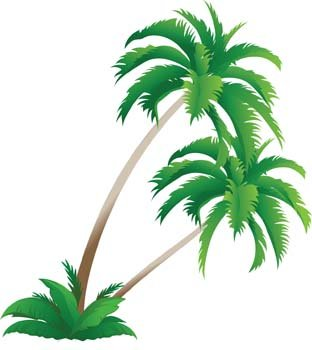 312x350 Date Palm Tree Clip Art, Free Vector Date Palm Tree