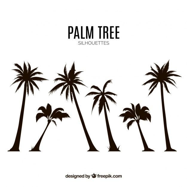 626x626 Silhouettes Set Of Palm Trees Vector Free Download
