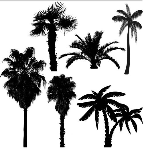 Palm Tree Vector Silhouette