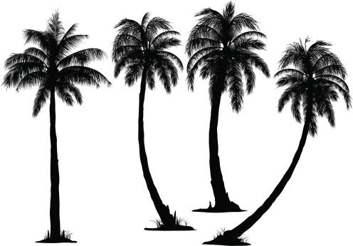 496x346 Coconut Tree Vector Id166007705 Tattoo Inspirations