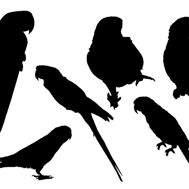 650x650 Free Vector Free Parrot Silhouette Vector