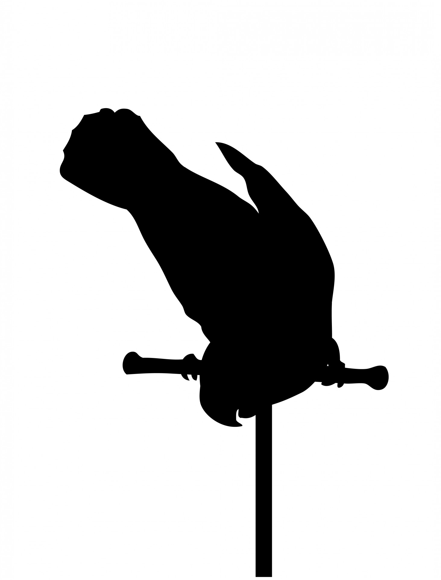 1463x1920 Parrot Bird Black Silhouette Free Stock Photo