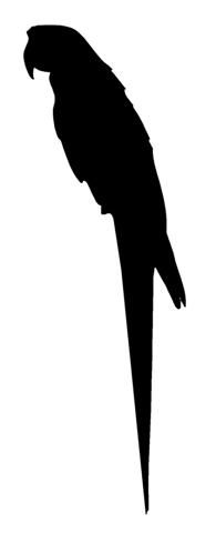 195x480 Parrot Silhouette Decal Sticker