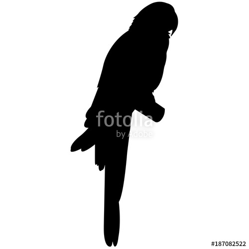 500x500 Parrot Silhouette Vector Graphics Stock Image And Royalty Free