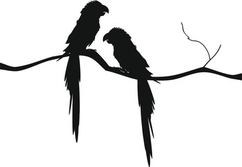 348x240 Search Photos Silhouette Of Parrot