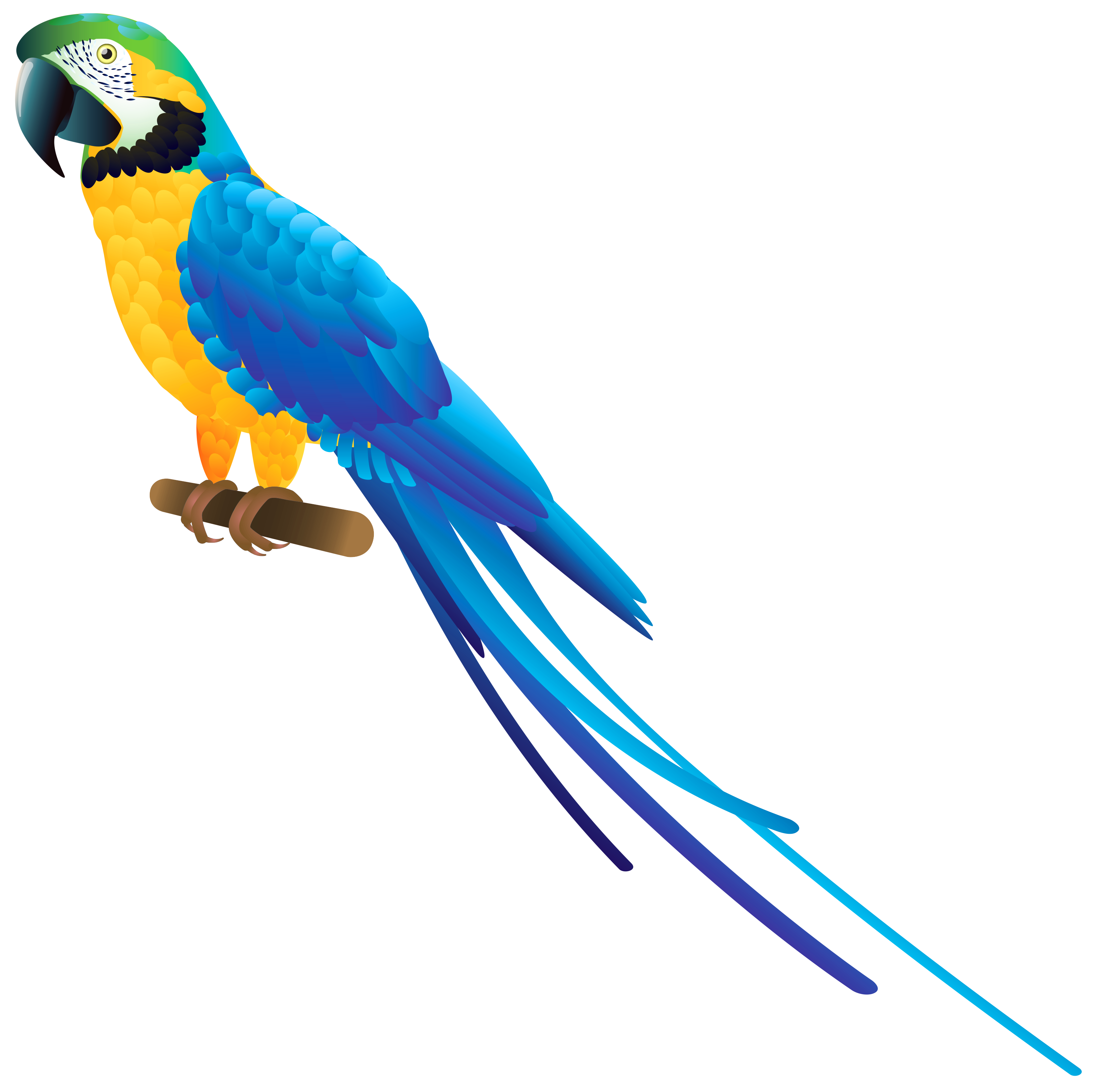 3316x3290 Blue Parrot Png Clipart