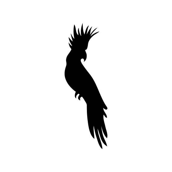 570x570 Cockatoo Bird Wildlife Graphics Svg Dxf Eps Png Cdr Ai Pdf
