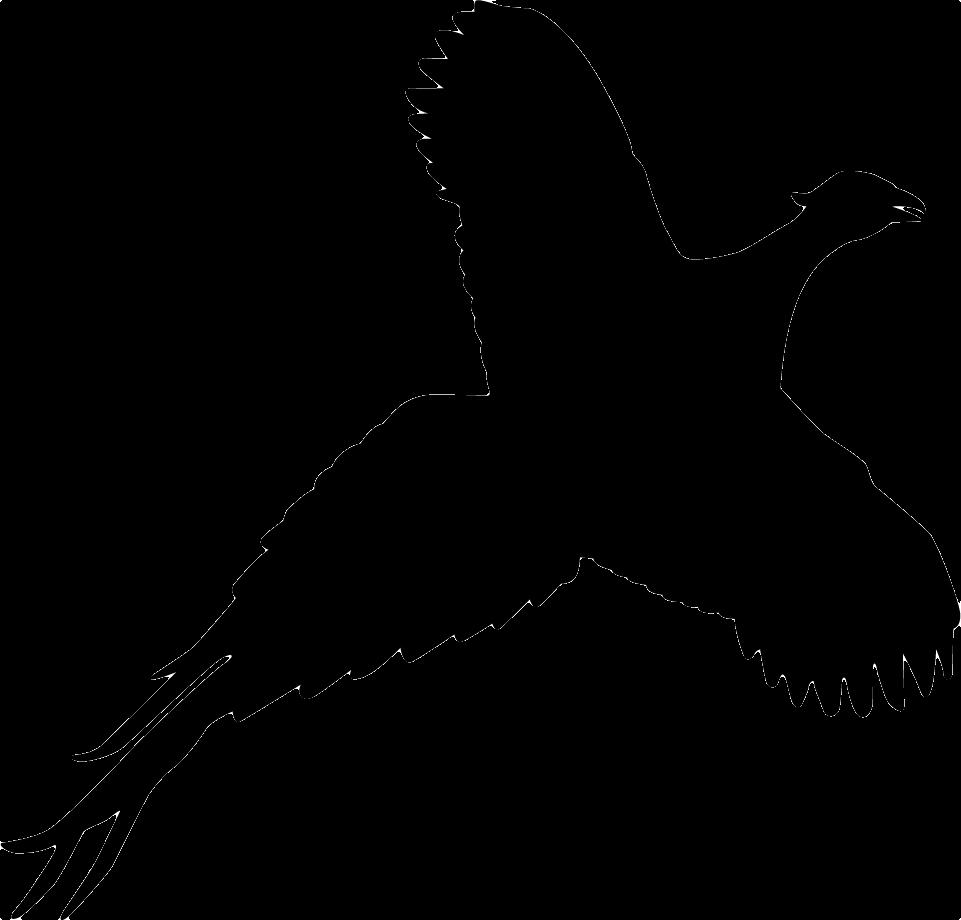 Pheasant Silhouette Vector