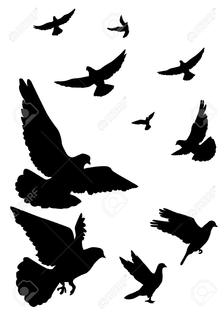917x1300 White Clipart Pigeon Flying 4054427
