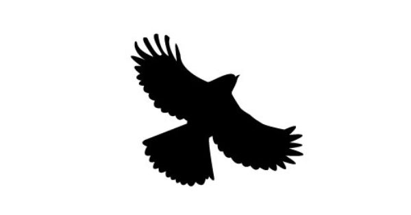 600x315 Bird Of Prey Clipart Flight Silhouette Clip Art