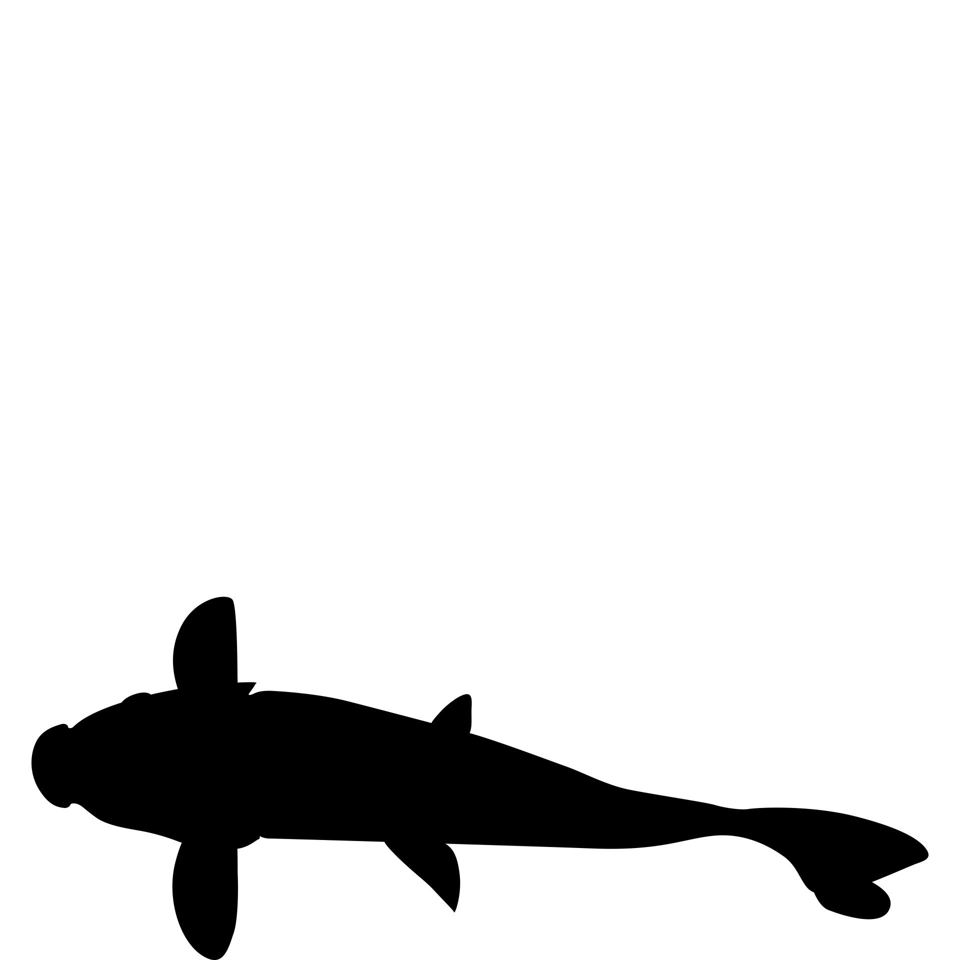 1920x1920 Image Result For Koi Fish Silhouette Koi Fish Fish