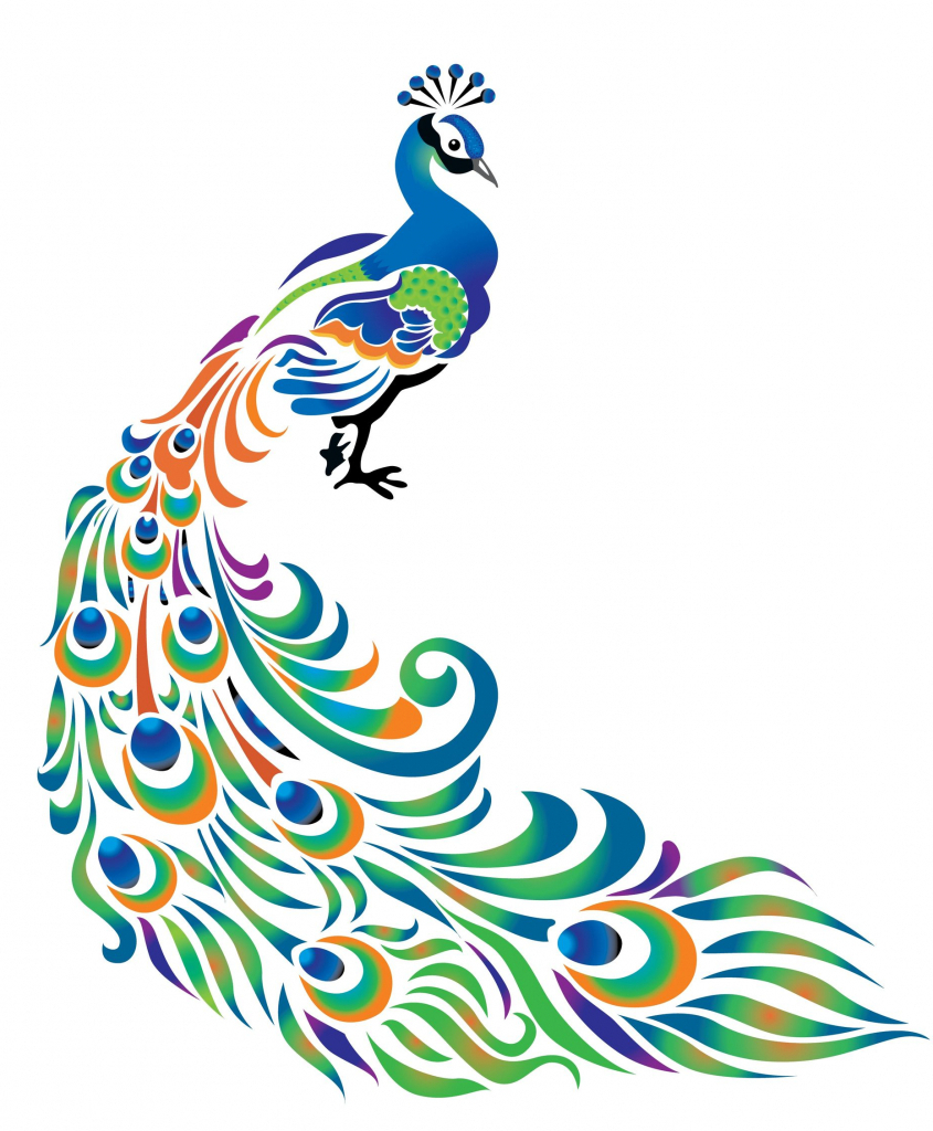 845x1024 Outline Drawing Of Peacock