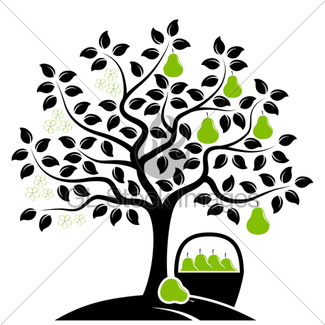 325x325 Pear Tree In Two Seasons Gl Stock Images