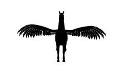 240x135 White Silhouette Of A Flying Pegasus. Alpha Channel. Alpha Matte