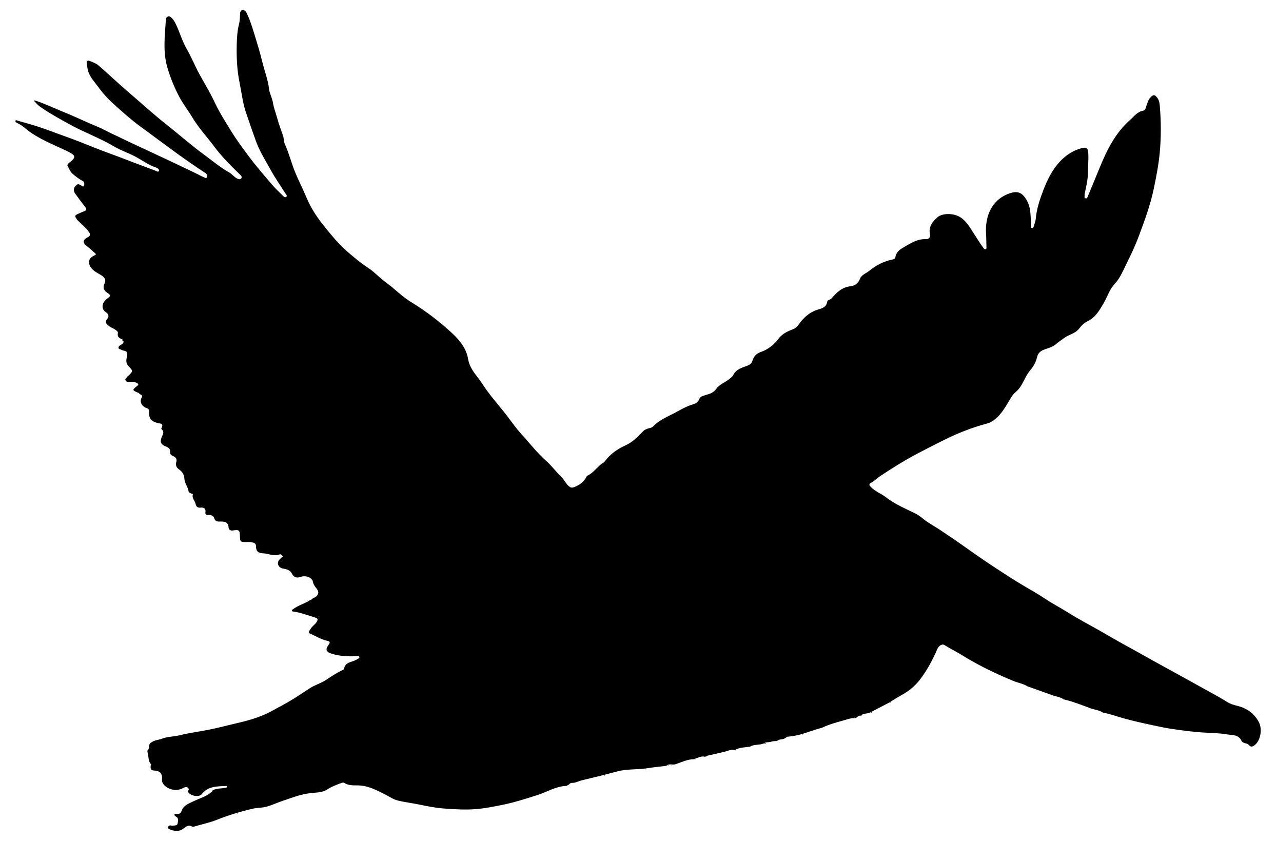 2487x1639 Brown Pelican In Flight Silhouette Clipart