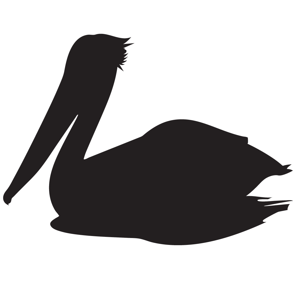 1024x1024 Brown Pelican Overview, All About Birds, Cornell Lab Of Ornithology
