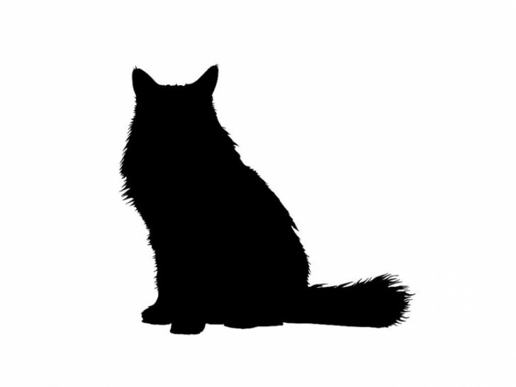 728x546 Persian Charming Silhouette Cat Portraits