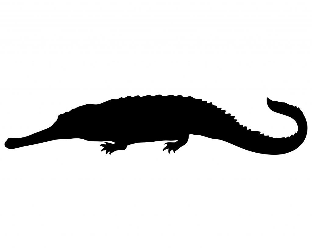 1024x819 Crocodile Clipart Shadow