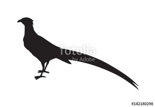 500x344 Pheasant. Vector Drawing Stock Image And Royalty Free Vector