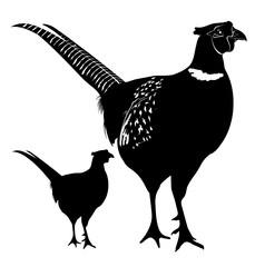 229x240 Search Photos Black Pheasant Silhouette