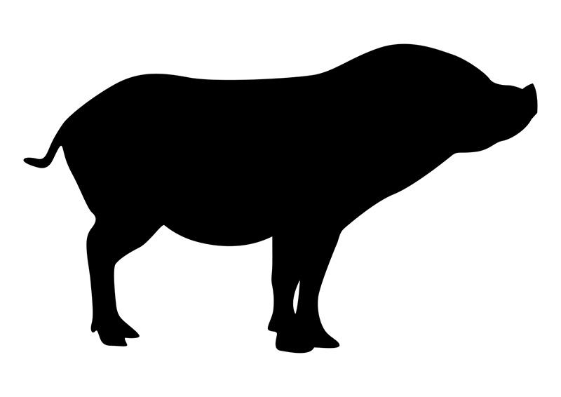 800x566 Pig Silhouette