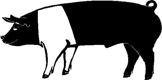 522x260 Pig Outline Clip Art