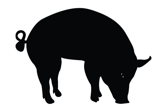 550x354 Pig Silhouette Vector Free Download Cricut Vector