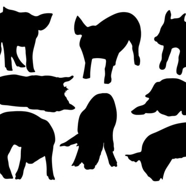 650x650 Free Vector Free Pig Silhouette Vector