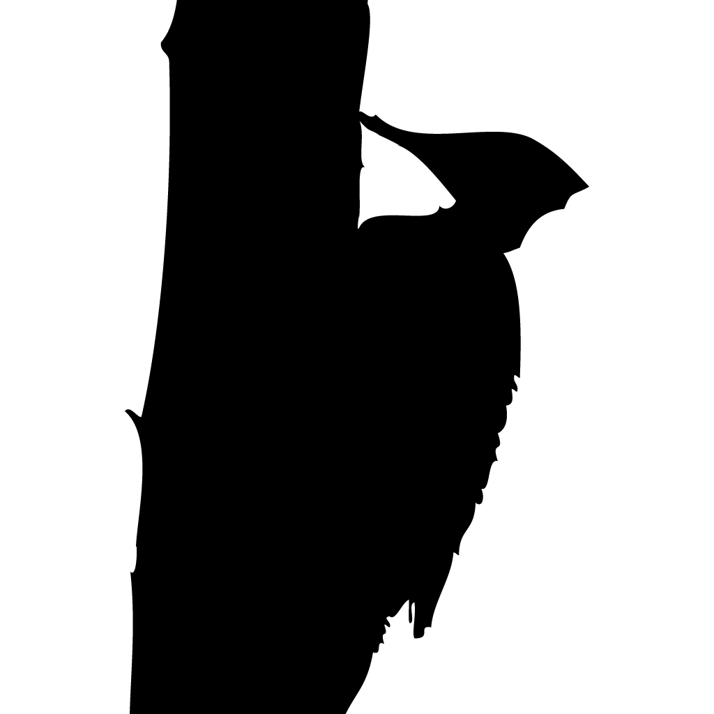 1024x1024 Pileated Woodpecker Overview, All About Birds, Cornell Lab