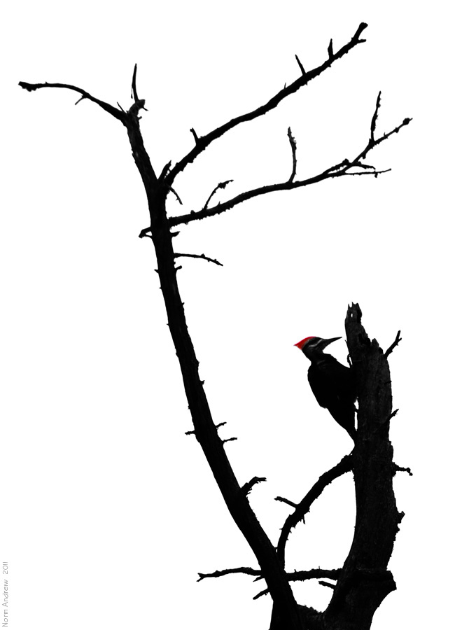 670x900 Woodpecker Silhouette To View Larger Click The Photo