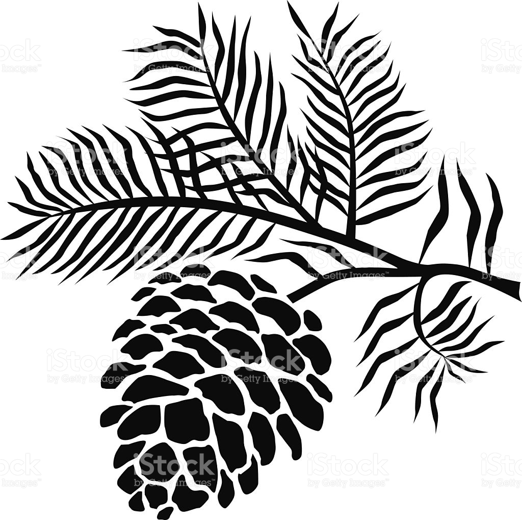 1024x1019 Pine Cone Clipart Black And White