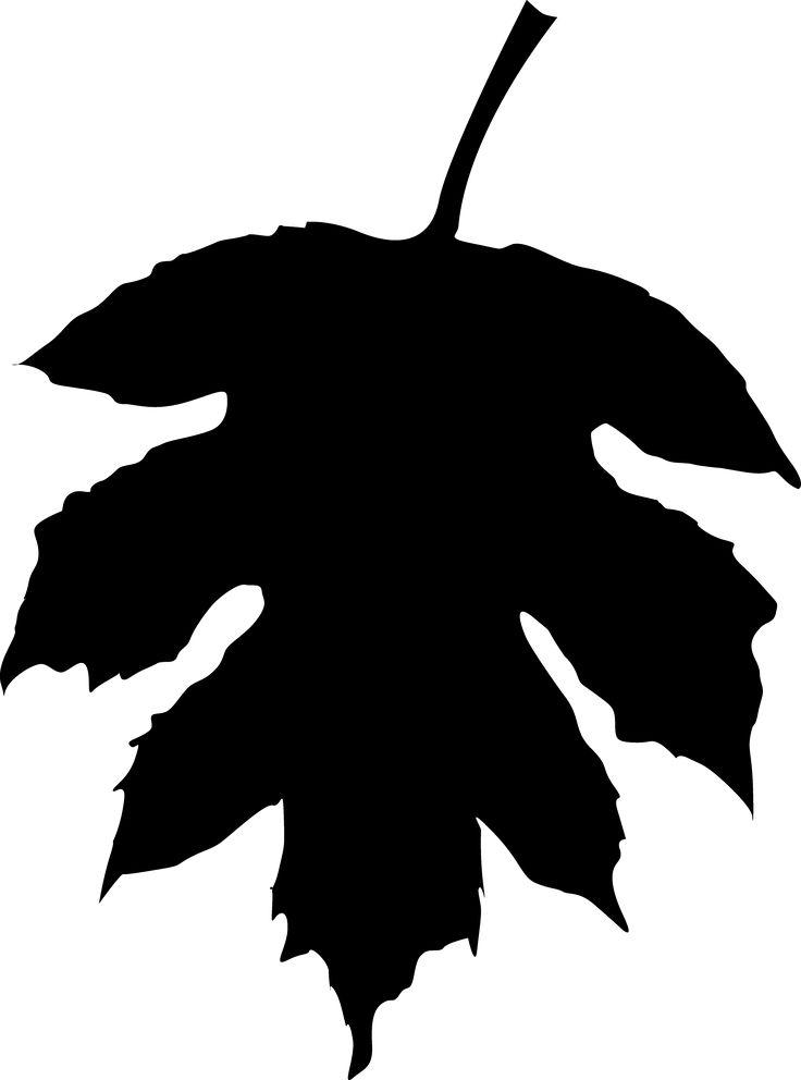 736x992 59 Best 000001 Fall, Leaves, Acorns, Pine Cones Images
