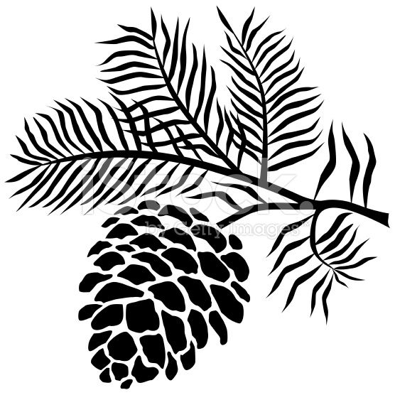 556x556 A Vector Illustration Of Pinecone On Branch In Blackd White.