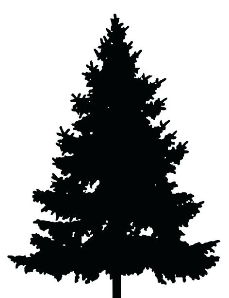 472x612 Evergreen Tree Outline This Is Best Pine Tree Pine Tree Silhouette