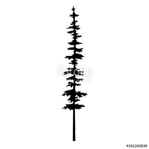 500x500 Vector Isolated Silhouette Of A Coniferous Tree. Can Be Used