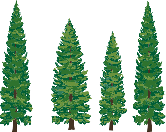 555x443 Michigan Pine Tree Clipart