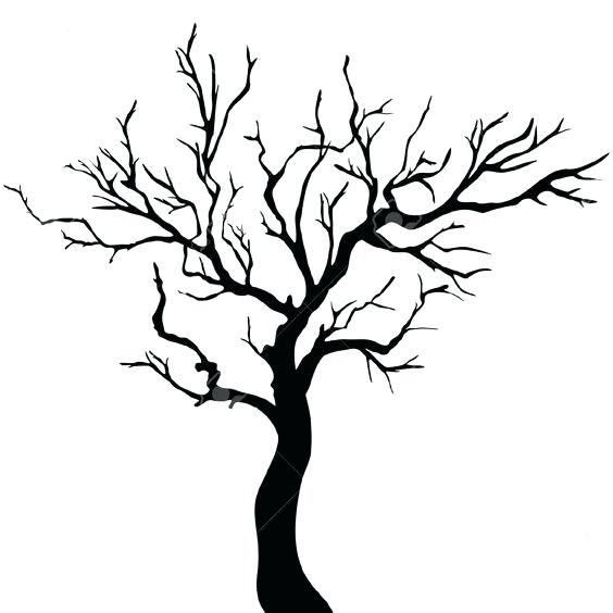 564x564 Tree Outline Drawing