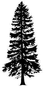 159x317 8 Best Logo Images On Pine Tree, Pine Tree Silhouette