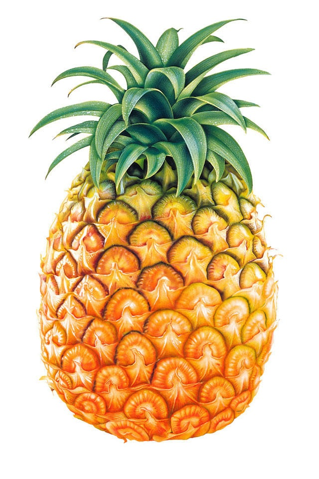 640x960 Pinecone +apple = Pineapple Cute Fruit Puns Clipart Library