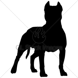 325x325 Pit Bull Terrier In Motion Gl Stock Images